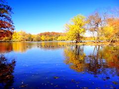 Beautiful Day Reflection (dimaruss34) Tags: newyork brooklyn dmitriyfomenko image sky clouds fall autumn prospectpark foliage reflection