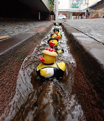 Ducks surfing in the Freiburg Bächle (rjmiller1807) Tags: holiday germany deutschland duck europe july ducks german streams freiburg rubberduck rubberducks 2015 bächle olympustg4