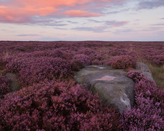 Burbage Moor (Paul Newcombe) Tags: pink sunset england bw flower rain nationalpark rocks purple outdoor heather peakdistrict september bloom peaks burbage moorland southyorkshire burbagemoor cokin 2015 ndfilter latersummer lognexposure 3stop derbyshore nd9 zpro 6stop peakdistrictphotography paulnewcombephotography canon1635f4l ndgradientfliter