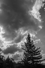 Spruce Knob Eastern Overlook (vynsane) Tags: wv westvirginia spruceknob monongahelanationalforest findyourpark