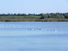 file14260 (Gianluigi Roda / Photographer) Tags: landscapes delta waters waterbirds waterlands