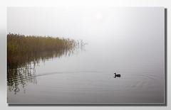 Morning Mist #2