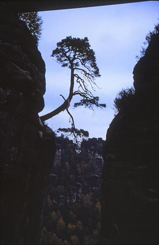 "Elbsandsteingebirge (039) Felsenburg Neurathen • <a style=""font-size:0.8em;"" href=""http://www.flickr.com/photos/69570948@N04/21925224461/"" target=""_blank"">View on Flickr</a>"