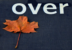 It's over (James_D_Images) Tags: blue autumn brown white fall sign leaf maple over fallen asfound