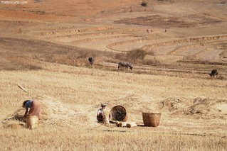 Farmers in Myanamr
