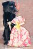359/365 (Lua Pramos) Tags: dog baby love cão project de amor dia perro gift cachorro 365 lovely yuka projeto presente cani presentedenatal 365days 365dias 365días projeto365dias 359365 projetofotográfico diadepresente yukapuma yukapumadog projetofotográfico2014 365photographyprojects yukinha dogyuka cachorroyukapuma