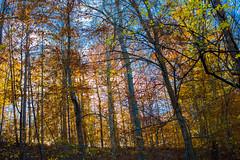 Hilton Area (11-10-16)-083 (nickatkins) Tags: fall fallcolors fallcolor fallfoliage autumn water sun sunlight stream