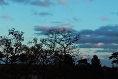 13 (Pauliti) Tags: uk blue sky naturaleza tree nature silhouette azul clouds arbol cielo nubes silueta colchester