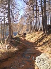 DSCN4430 (Thomas Larsen.) Tags: trees alps alberi forest woods path sentiero alpi bosco valchiavenna mulattiera forcola