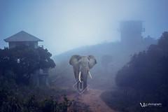 varadimala (Vishnu T Suresh) Tags: varadimala melthottam silent valley national park kerala tourisum elephant fog mist estate india agali aanakkatti palakkad green forest malayala manorama silentvalley