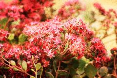 Autumn Flowers (iofdi) Tags: flowers homemadetextures hss sliderssunday