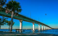Causeway Pelican (tclaud2002) Tags: pelican bird bridge causeway stuartcauseway tree palm palmtree river indianriverlagoon lagoon water sky seascape weather outdoors outside nature stuart florida usa