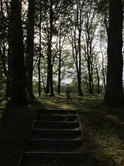 Dunrobin Castle 2016 (Tracey Paterson) Tags: dunrobincastle castle clan sutherland architecture history coast scotland clansutherland gardens woods forest trees light steps
