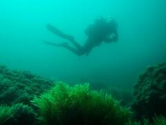 PA070559.jpg (Michael Bartosek) Tags: olympusepl3 catalinaisland olympus1442mm underwater catalina diving california pacificocean