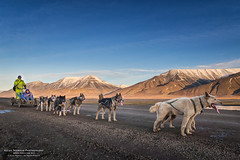 Dog sledding in Adventdalen (The Autodidact Photographer) Tags: arctic arktis autumn canon continent europa europe europedunord fall foto fotografering kamera kompaktkamera kontinent norden nordeuropa nordiccountries norge northerneurope noruega norway norwegen october oktober paysnordiques photo photography pointshoot powershotg7x scandinavia scandinavie season skandinavia skandinavien spitsbergen spitzbeergen spitzbergen svalbard tid time rstid adventdalen adventvalley greendog polardog huskey greenlanddog dogs sled