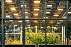 herbal life in a brave new world (glasseyes view) Tags: glasseyesview green grn laboratory plants artificiallight science growing