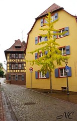 Tree in the middle of town (Nancleve) Tags: germany vacation houses buildings fall colour ettenheim