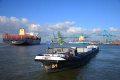 Nulli-Cedo DST_1663 (larry_antwerp) Tags: binnenvaart nullicedo container mscditte mediterraneanshipping maersk psaterminal noordzee terminal 9754953