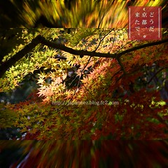 (finalistJPN) Tags: redleaves autumncolors lighting spotlight kyoto autumnleaves discoverychannel pictaro visitjapan traveljapan presentingpicturesandphotos ppap nationalgeographic discoverjapan autumnsky stockphotos worldheritage powerspot