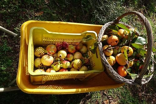 pomegranate & cachi