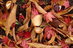 Wiesbaden, Nerotal-Anlagen, Herbstlaub - autumn leaves (HEN-Magonza) Tags: wiesbaden nerotalanlagne nerotalpark herbst autumn hessen hesse deutschland germany