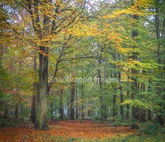 Autumn (Snapdragon Lincs) Tags: woodland trees leaves green yellow red orange walk autumn lincolnshire beautiful scenery cold wet chilly