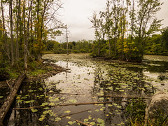 The pond during a drought (hickamorehackamore) Tags: 2016 cornelllabofornithology ithaca ny nystate newyork newyorkstate sapsuckerpond september