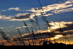 Chamberlain Sunset (Funkomaticphototron) Tags: coryfunk southdakota sd sunset grass sky clouds prairie outbehindshopko midwest rural farmland farm sillouette