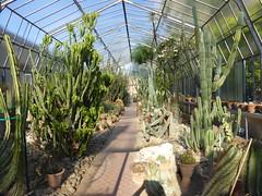 Orto Botanico, Palermo, Sicily. (ajhammu0) Tags: ortobotanico palermo sicily 2016