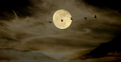 Once in a Supermoon (Karen McQuilkin) Tags: onceinasupermoon fly geese karenmcquilkin moon fullmoon daarklands