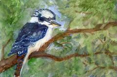 Kookaburra (molossus, who says Life Imitates Doodles) Tags: 52weeksofwatercolorbirds kookaburra globalartmaterials sennelier silverblackvelvetwatercolorbrush