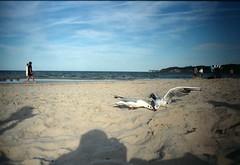 Sea chickens.   #roadtrip #north #beach (kris erb) Tags: sea sun film beach birds analog 35mm germany freedom sand roadtrip ontheroad rugen instagramapp