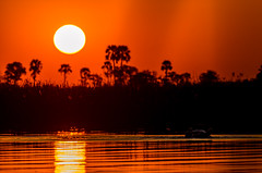 Sunset in the Okavango Delta (GJV27) Tags: sunset red sky sun water animals silhouette outdoor delta hippo botswana nightfall okavango