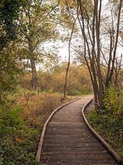 Marais de Fretin (Nord) (Instantsmagic) Tags: automne paysage marais nord fretin