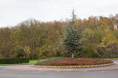 Un joli cdre en guise de rond-point (Olivier_1954) Tags: divers belgique be arbre charleroi rondpoint cdre couillet rgionwallonne albumolivier