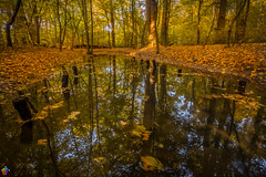 Golden autumn 7 (JTPhotography) Tags: autumn golden leaves trees nature water reflections sunny wildlife rivers lake panasoniclumixg6 olympus918mm