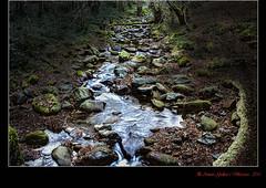 """El Bosc I """"Quinto Real""""  (Eugi - Navarra - Espanya). (Antoni G.V.) Tags: españa musgo agua arbres bosque perspectiva aigua piedras d800 navarra bosc molsa espanya pedres riera eugi"""