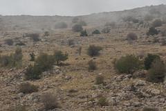 20140889 (katyarud) Tags: animals israel  hermon wildboar     susscrofa