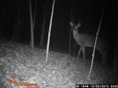 Trail Cam (Lisa Zins) Tags: woods cam doe deer trail buck whitetaileddeer wildgame trailcam nightcam mtjuliettn nightcamera digitalgamecamera wildgameinnovations lisazins moultriedigitalgamecamera
