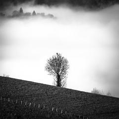 Paysage (rapetout14) Tags: france montagne landscape arbres nuages paysage arbre brume pyrnes midipyrnes croixblanche arrodets