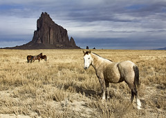 Wild Horses at Shiprock (Dave Toussaint (www.photographersnature.com)) Tags: travel november wild horse usa newmexico nature photoshop canon landscape photo interestingness google interesting raw photographer image scenic picture clarity explore cc adobe getty nm shiprock adjust 2015 denoise 60d topazlabs photographersnaturecom davetoussaint creativecloud
