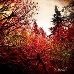 Bald Mountain (Tina Stadeli) Tags: trees mountain forest baldmountain