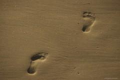 Following.... (Joe Hengel) Tags: socal southerncalifornia sand footprints california ca goldenstate golden orangecounty oc outdoor beach danapoint danapointharbor seaside
