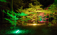 Green, Yellow & Red Trees (Morten Kirk) Tags: mortenkirk morten kirk reflektor light festival public art handhold night photography søndermarken park october 2016 sony a7rii a7r ii sonya7rii ilce7rm2 zeiss sonnar t fe 35mm f28 za sonnartfe2835za sel35f28z
