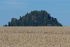 some corn? (HuemmelGuemmel) Tags: elbsandsteingebirge gebirge sandstein elbe getreide cereals wheat weizen