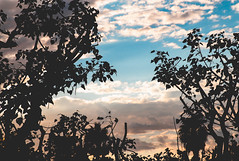 Out of Darkness (timmyddinhers) Tags: scenery blue pink photography nature sunset views trees clouds heavens contrast nightsky backlight aspiring scheme rainy day 100