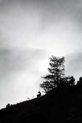 ART_5539m (MILESI FEDERICO) Tags: milesi milesifederico minimal montagna montagne mammifero wild wildlife autunno automne italia italy iamnikon inmontagna alpi altavallesusa alpicozie altavaldisusa visitpiedmont valdisusa valsusa valledisusa valliolimpiche piemonte piedmont silhouette silouette sagoma sagome cesana cesanatorinese cervo tramonto travel sunset nikon nikond7100 nital natura nature d7100 dettagli dettaglio controluce contrasto bianconero bw biancoenero europa europe flickr fauna