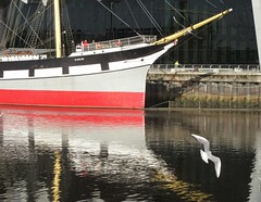 Ship and seagull (rbjag71) Tags: seagull aquaticbird riverclyde tallship museum clydeside glasgow canonpowershot sx610hs glenlee reflection