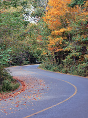 The Long and Winding Road (Bill Badgett) Tags: autumn fall color colour louisville kentucky cherokeepark highway road winding leaves