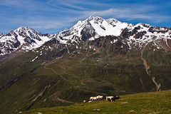 Austria - Wildspitze (++sepp++) Tags: vent tirol österreich at wildspitze austria tyrol mountain gebirge landschaft landscape sonnig sunny schnee snow schafe sheeps juni june berge tal valley ötztal ötztaleralpen alpen alps alpes